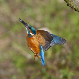 Kingfisher Flight 1