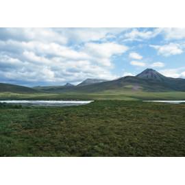 Yukon Scene 1