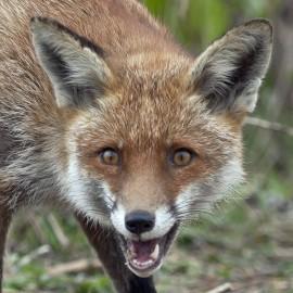 Fox London 3