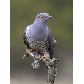 Bird Photo Library