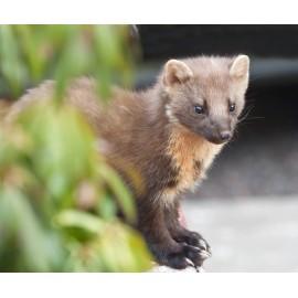Mammal Photo Library