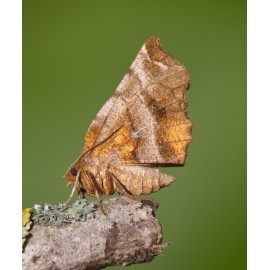 Insect Photo Library